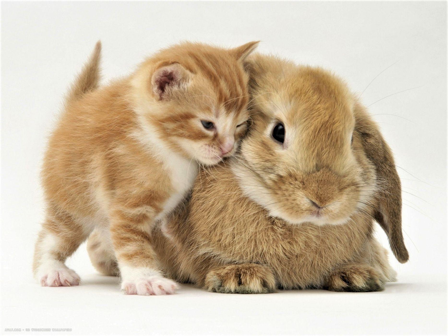 надо картинки с котятами и крольчатами вкладке вид найдете