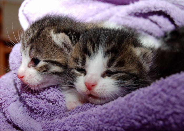kitten cat baby cute wallpaper