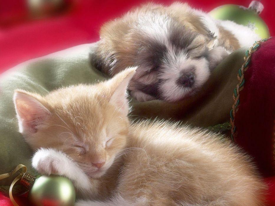 Kitten Cat Baby Cute Puppy Dog Wallpaper 1600x1200 1115229 Wallpaperup