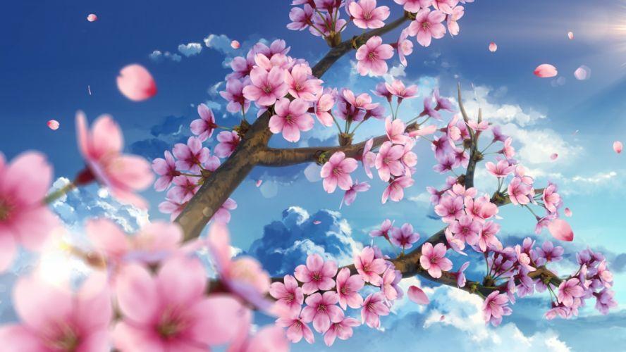 Konachan com - 242115 cherry blossoms clouds flowers nobody original petals sky waifu2x yuu knmy wallpaper