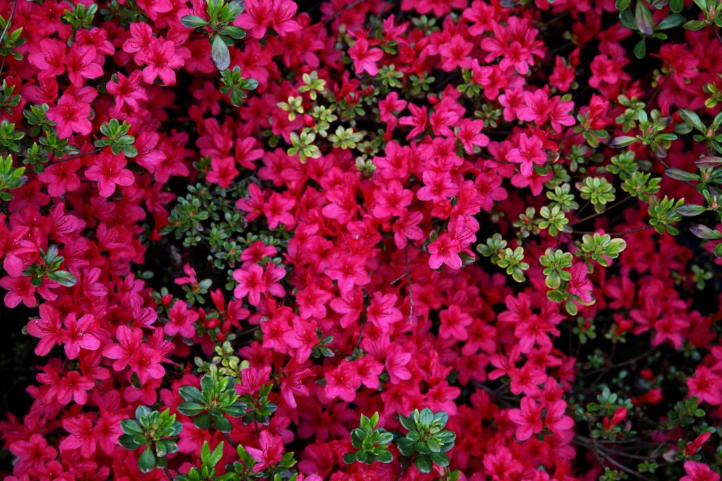flower nature plant garden color colorful wallpaper