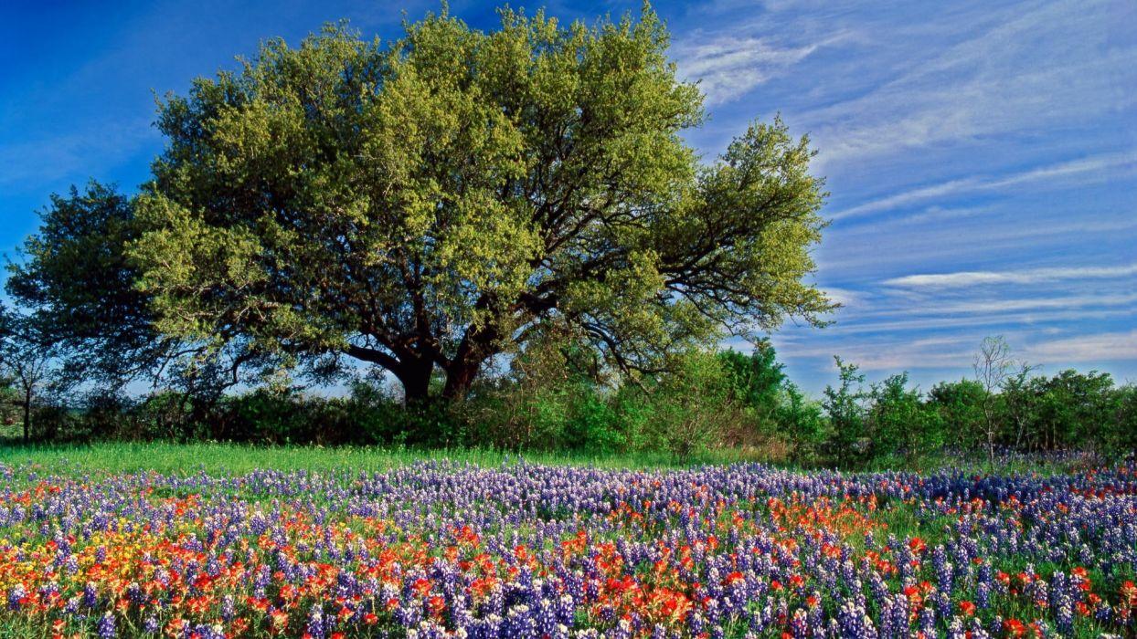 flower nature plant garden color colorful wallpaper
