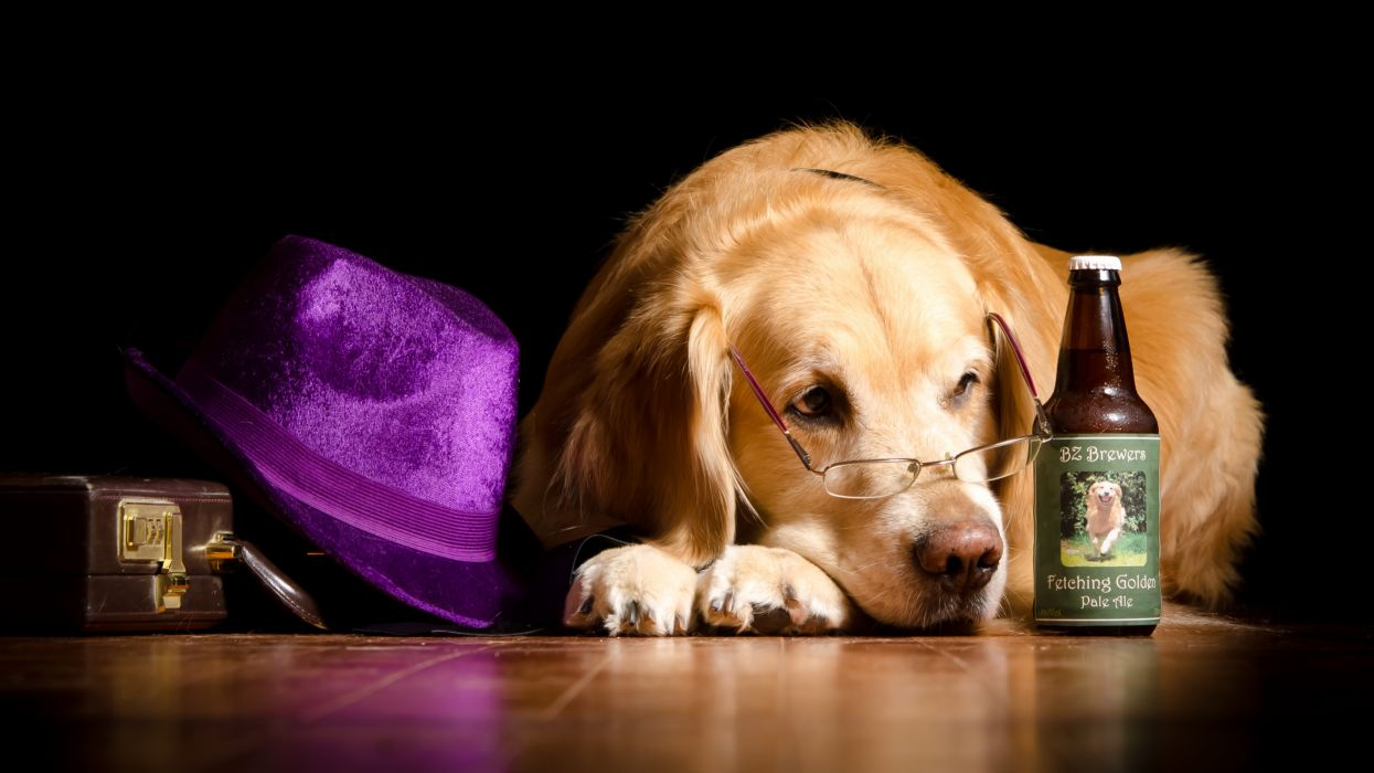 dog canine pet dogs wallpaper