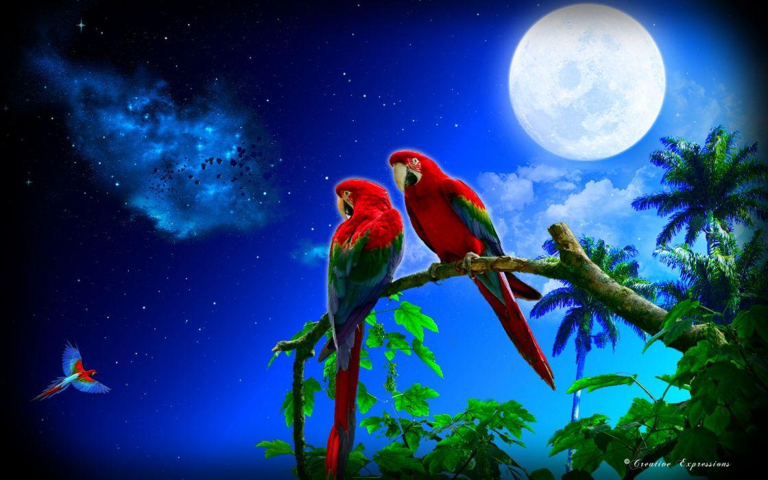 Parrot Bird Tropical Birds Parrots Wildlife Nature Wallpaper