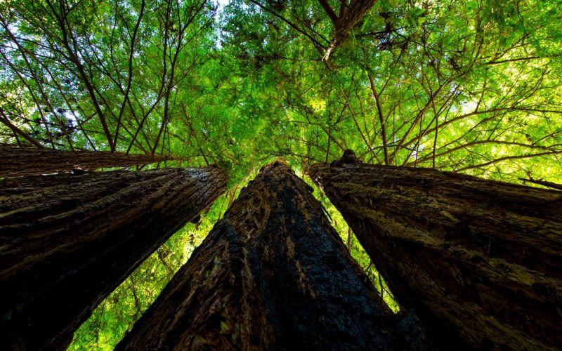 nature landscape trees tree wallpaper