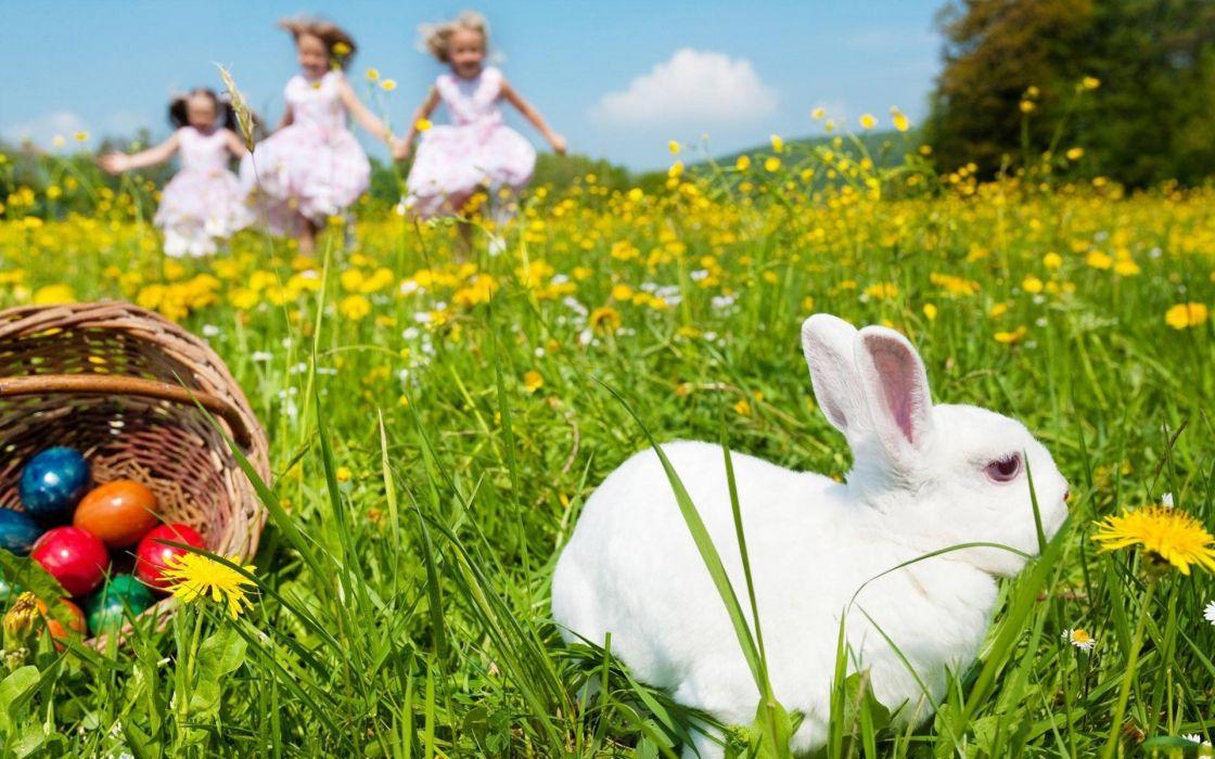 huevos conejo pascua niy wallpaper