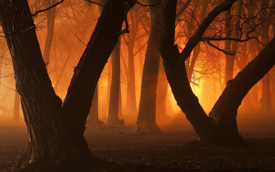 Nature Trees Forest wallpaper