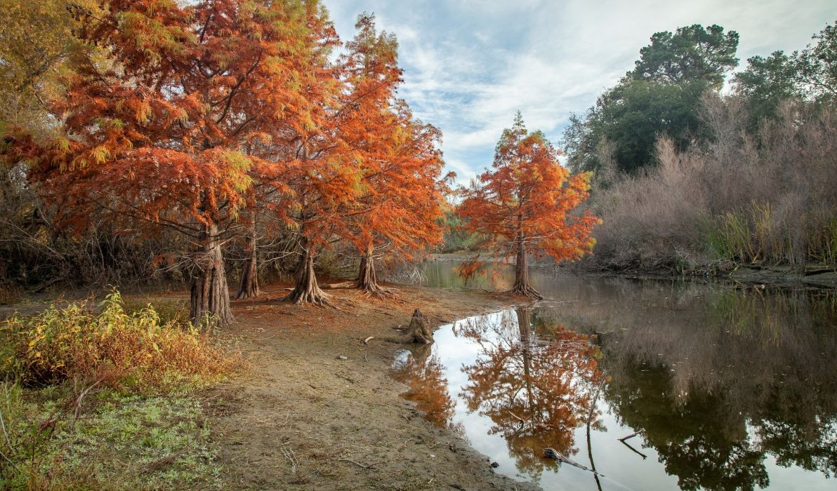 Nature Pond Autumn Park wallpaper