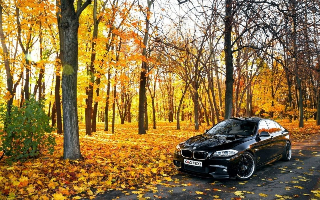 Cars Black BMW In Forest wallpaper