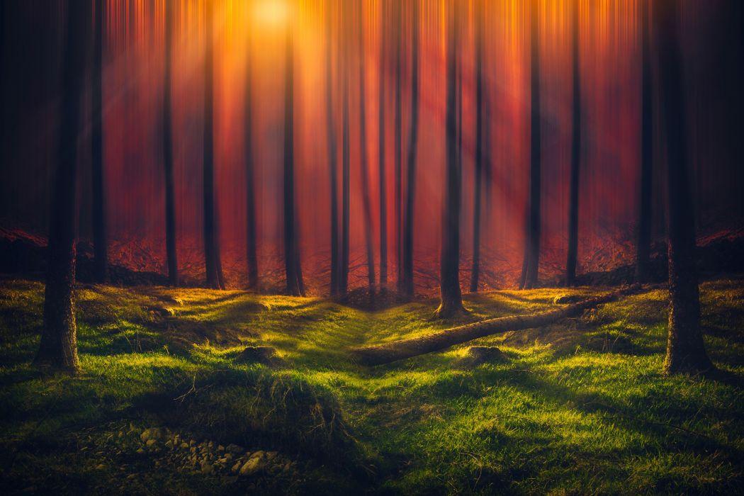 Nature Sunbeam Forest wallpaper
