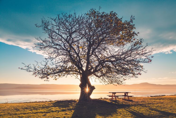 Nature Huge Tree Sunbeams Bench wallpaper