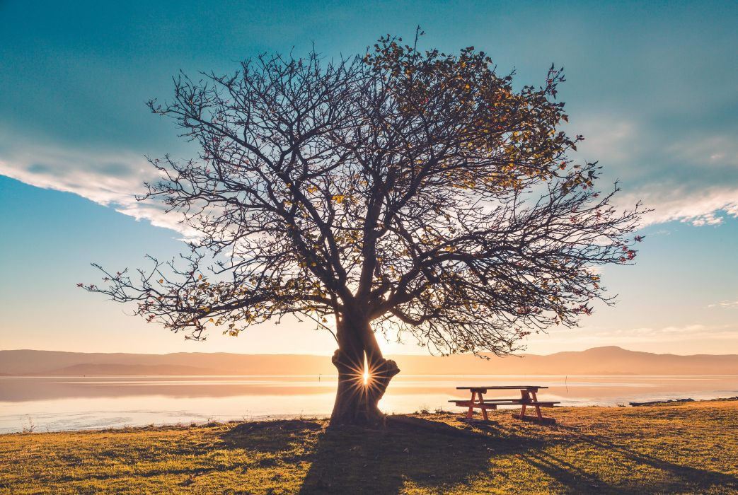 Nature Huge Tree Sunbeams Bench wallpaper