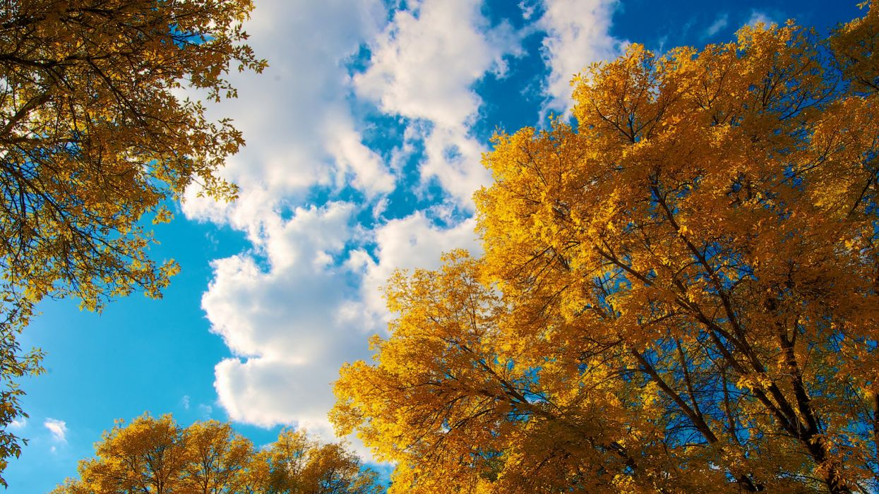 Nature Trees Autumn Clouds wallpaper