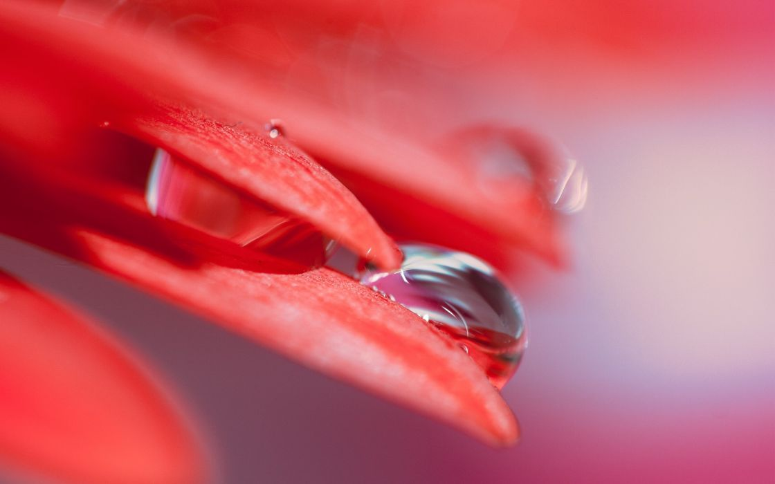 Red Leaf Drops wallpaper