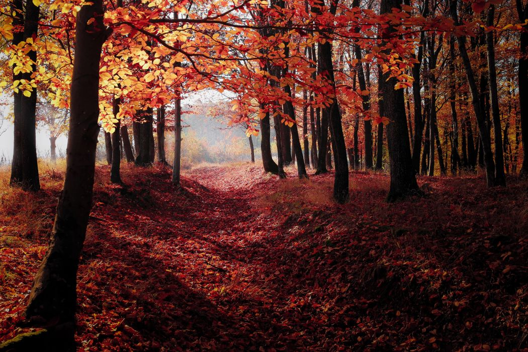 Autumn Woods Trees Fall Forest wallpaper