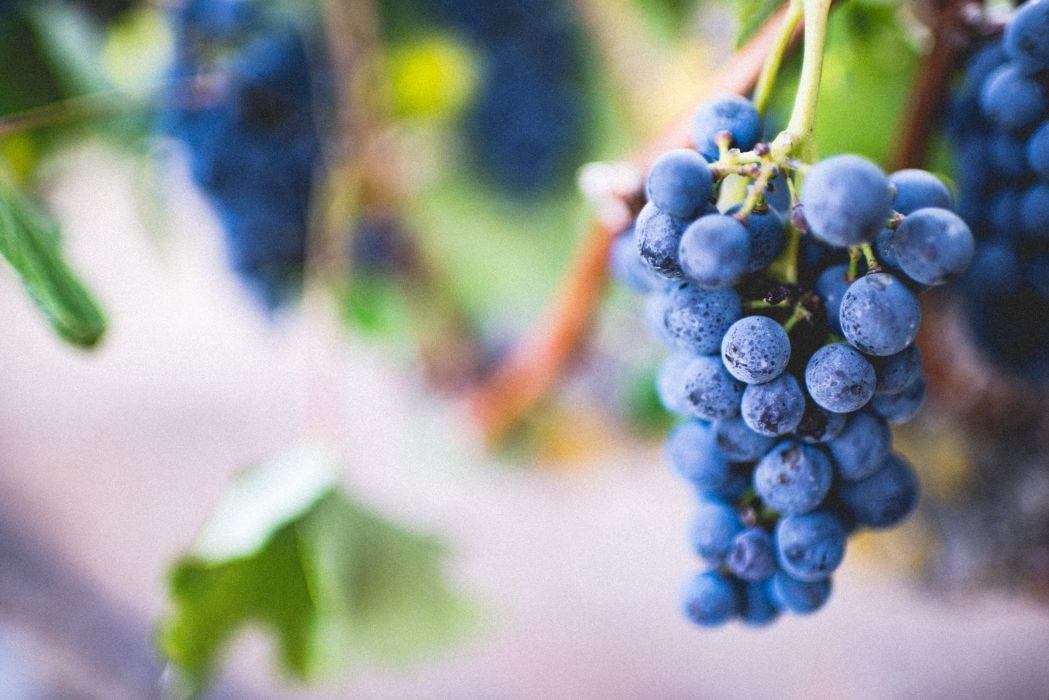 grapes grape food fruit plant nature wallpaper