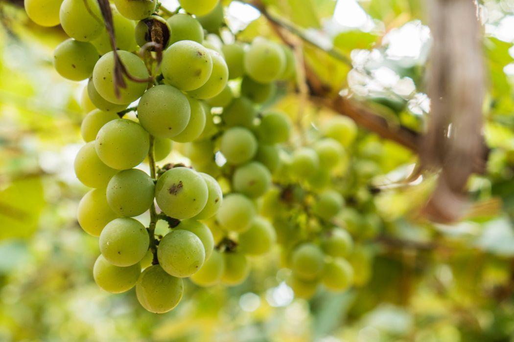 grapes grape food fruit plant nature wallpaper