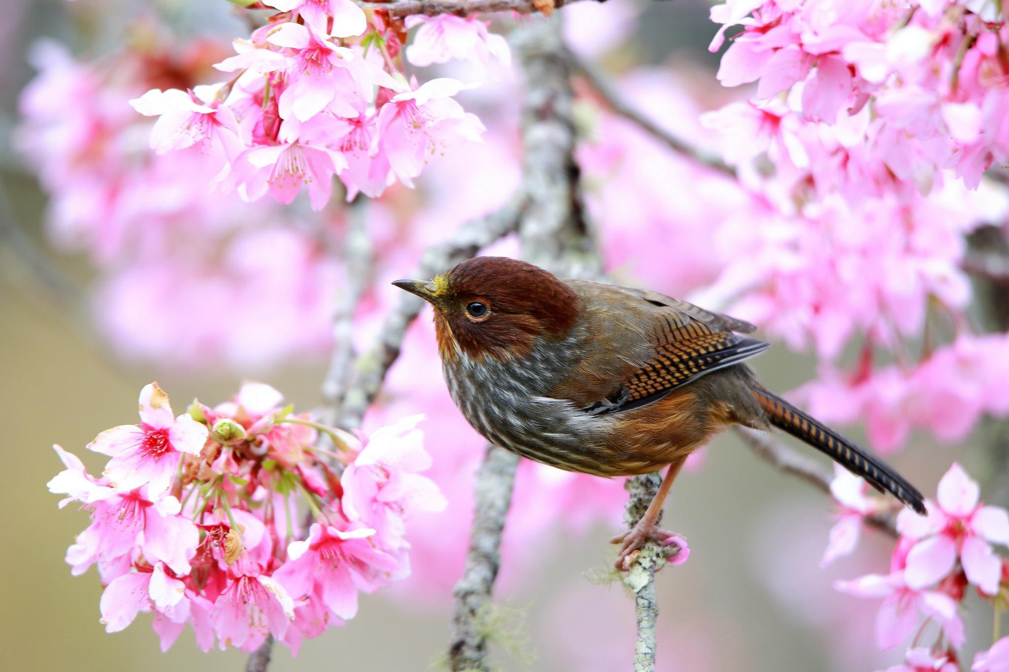 природа птицы животные весна  № 290805 загрузить