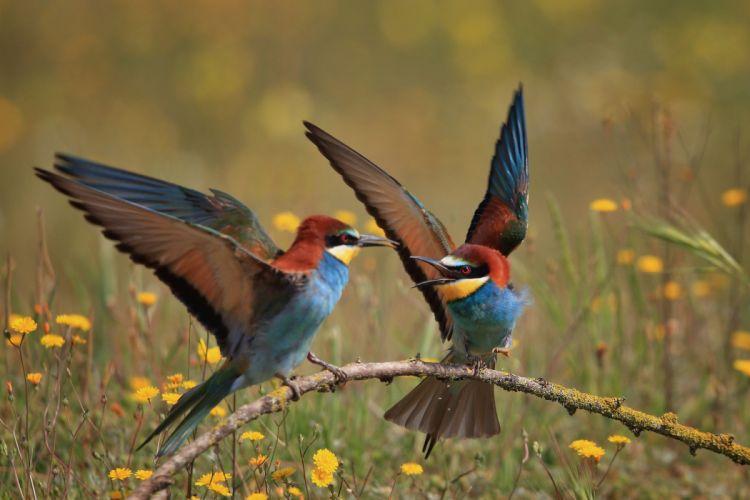 animal wildlife birds bird nature animals wallpaper