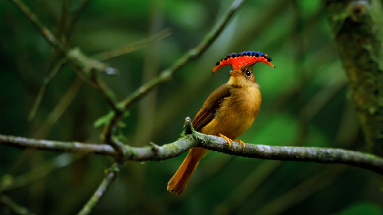 animal wildlife birds bird nature animals wallpaper