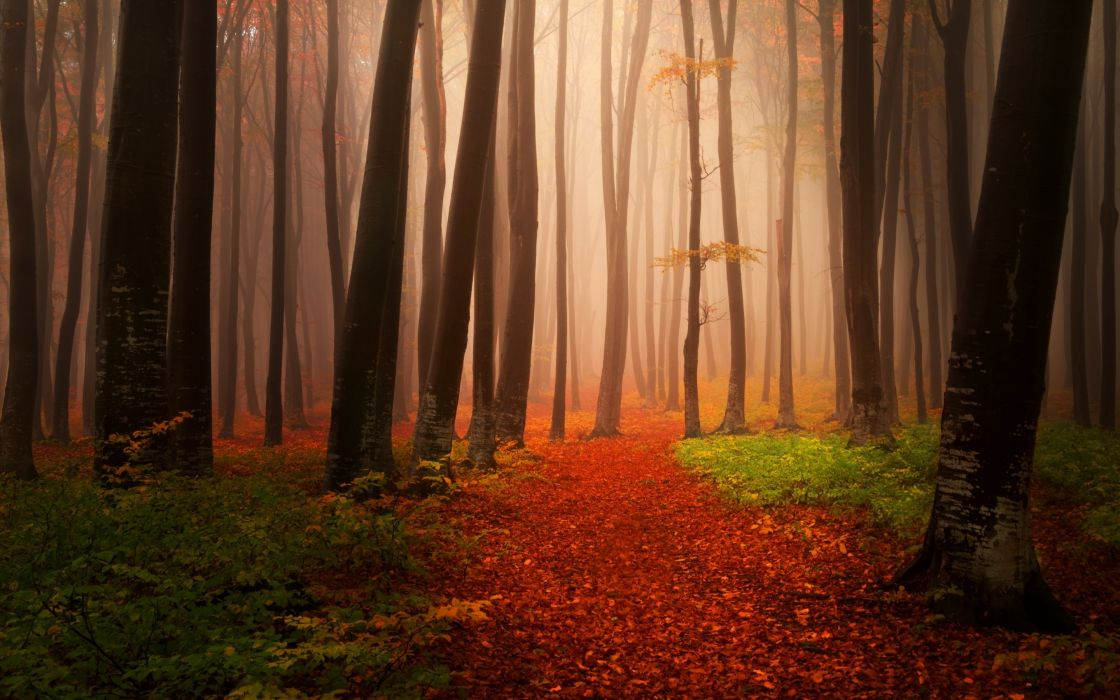 Nature Autumn Starts Forest wallpaper