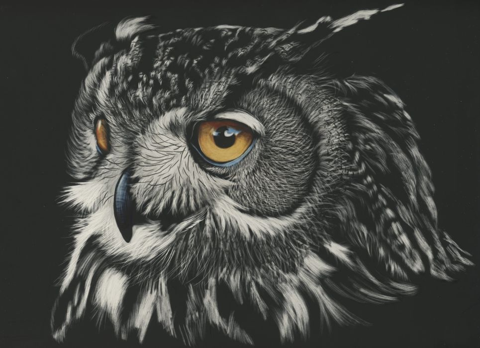 Animals Owl Painting wallpaper