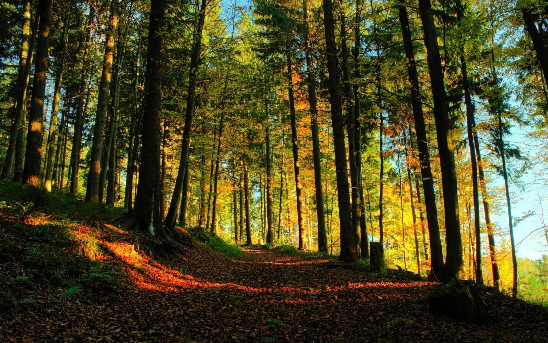 Nature Forest Path wallpaper