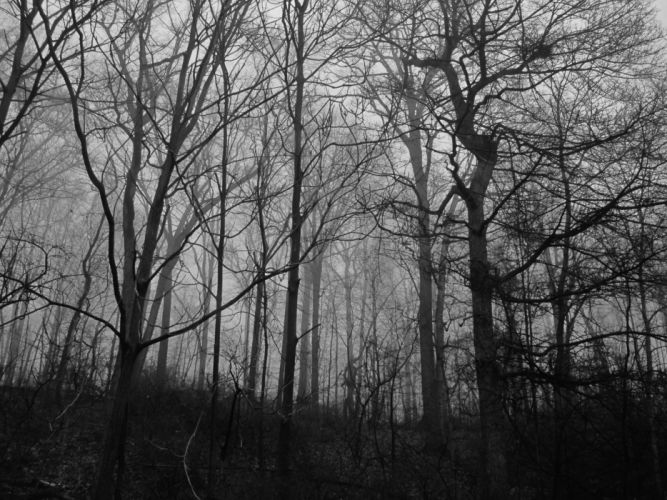 scary woods forest wallpaper