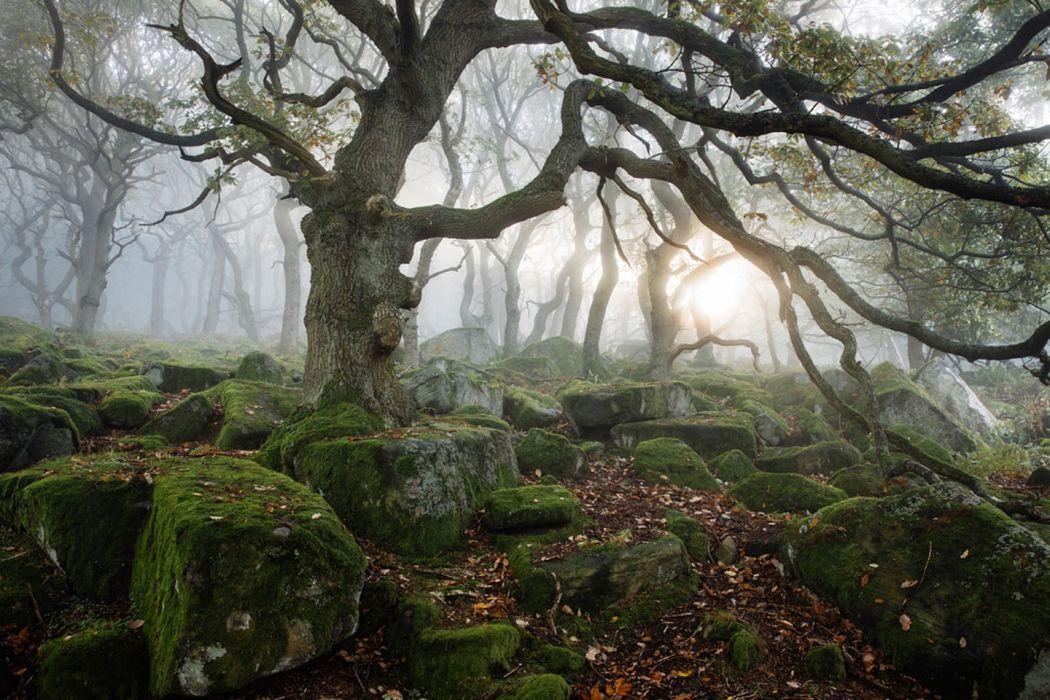 tree beauty forest landscape wallpaper