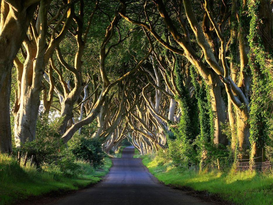 tree beauty road landscape wallpaper