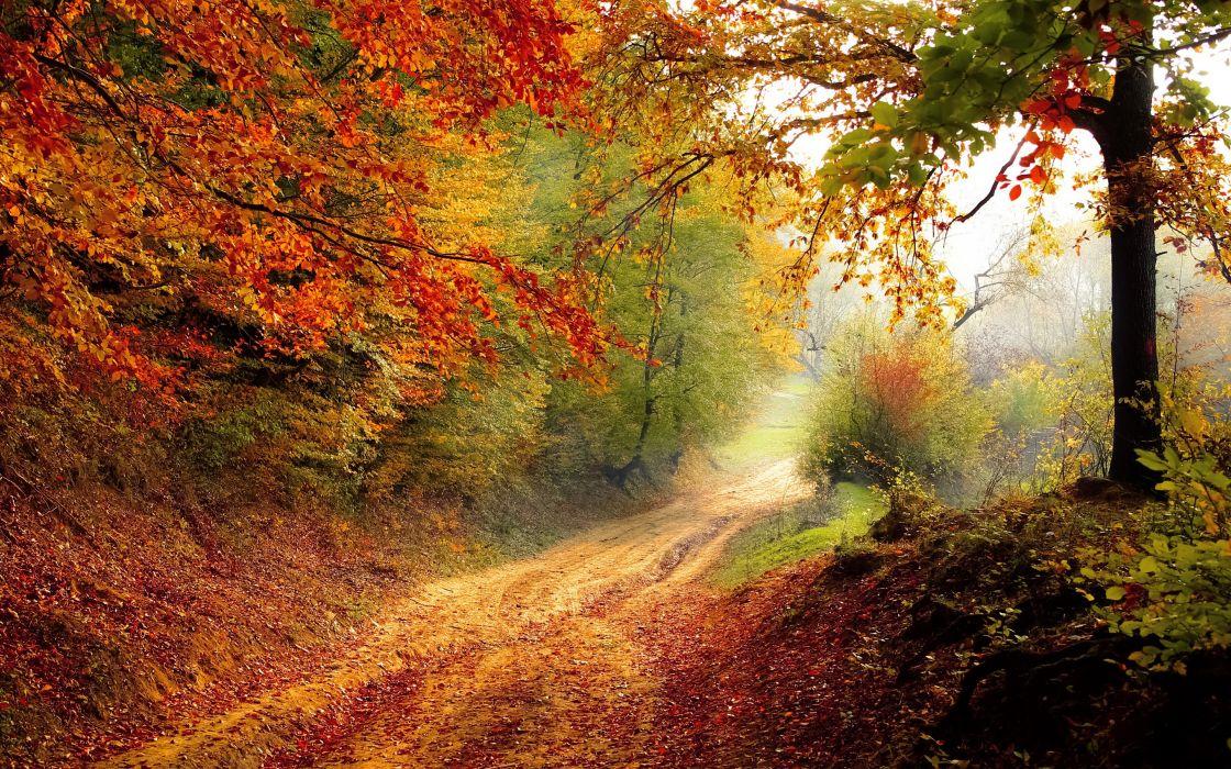 Nature Autumn Road tree wallpaper