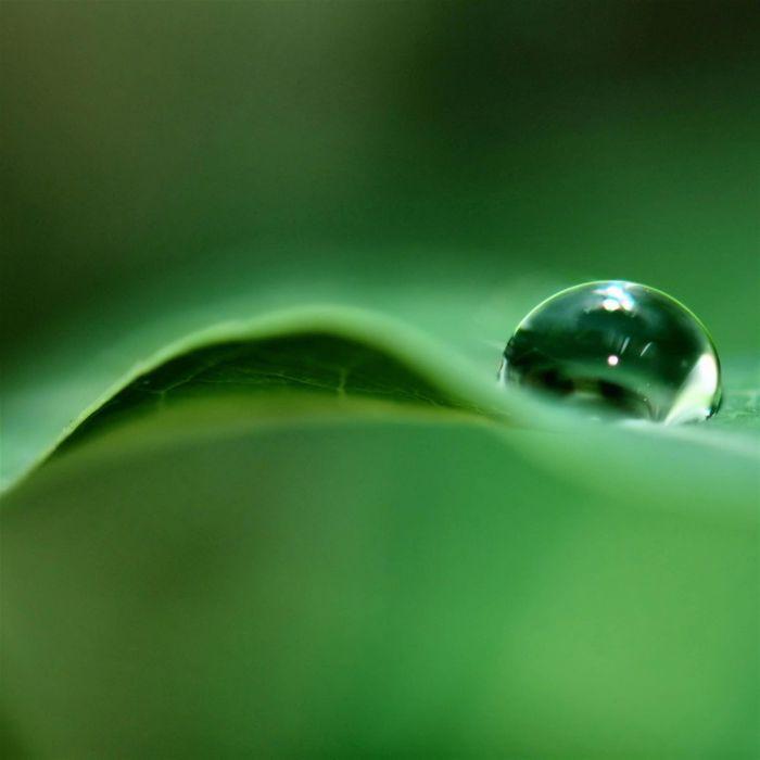 gota agua hoja verde naturaleza wallpaper
