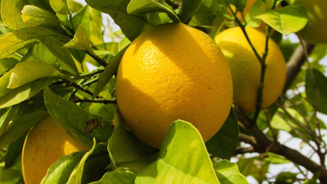 naranjas frutas naturaleza wallpaper