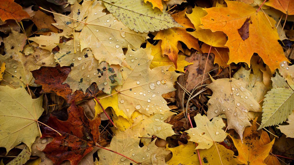 hojas secas otoy wallpaper