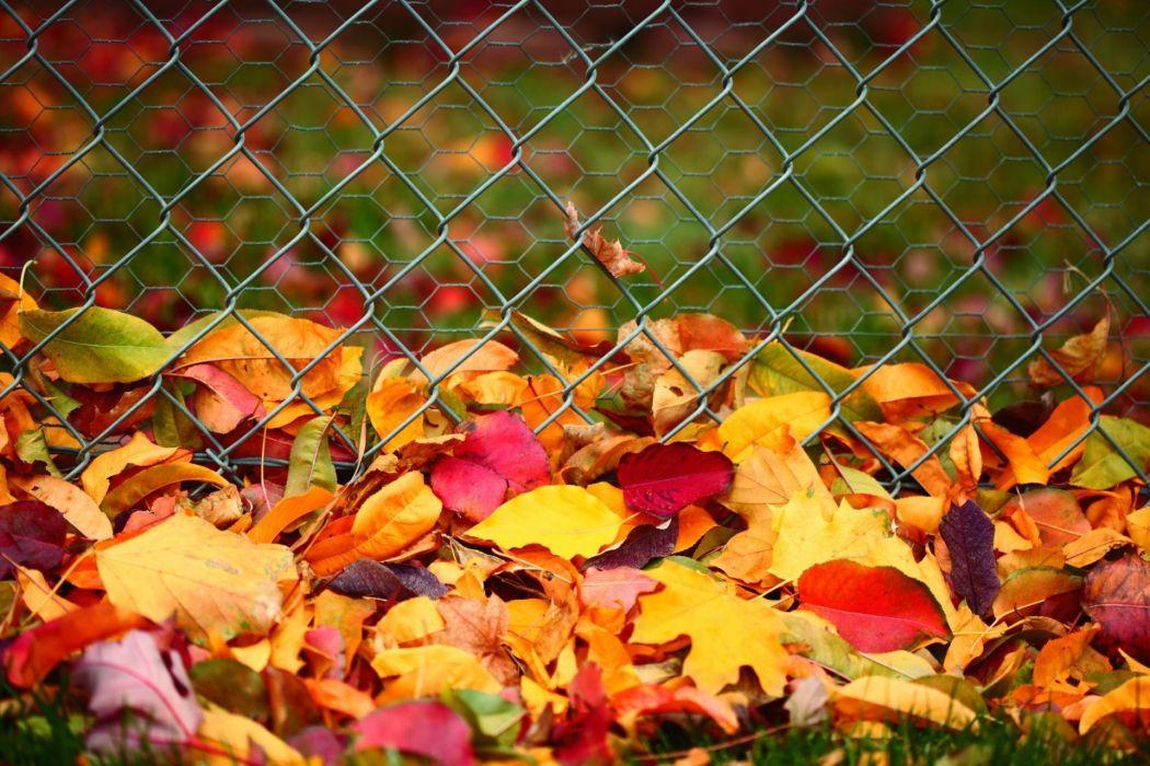 hojas secas colores alambre wallpaper