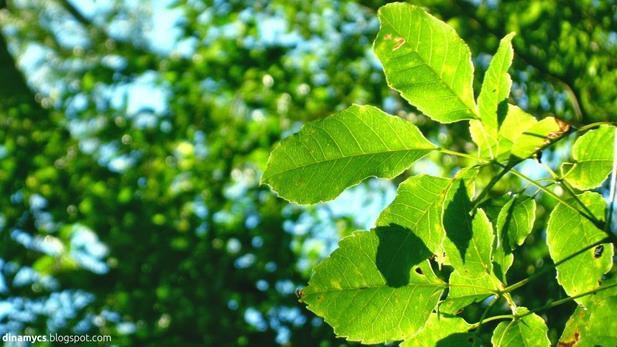 hojas verdes arbol naturaleza wallpaper