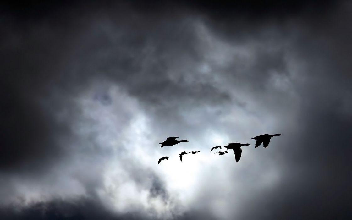 paisaje cielo nubes patos volando naturaleza wallpaper