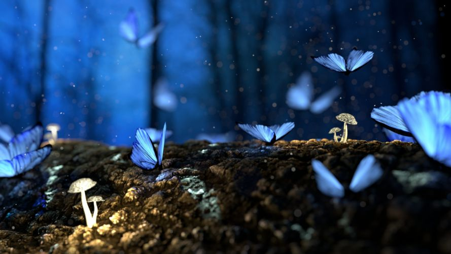 beautiful blur bright butterfly color colorful colourful delicate fantasy forest garden insect landscape light mushroom nature outdoors rain rock still life summer wings wallpaper