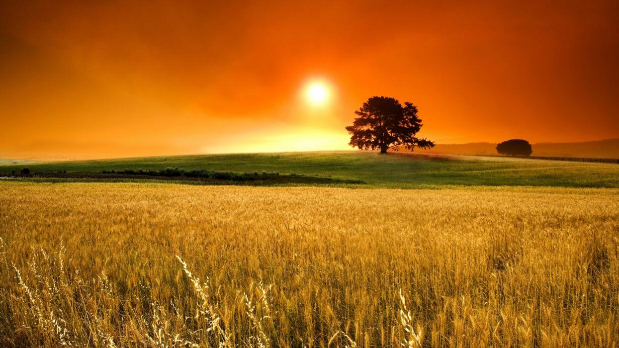 puesta sol cielo naranja trigo naturaleza wallpaper