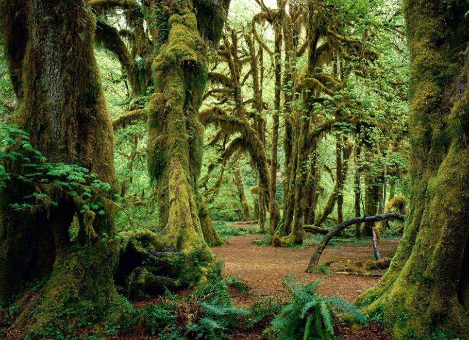 arboles bosque naturaleza wallpaper
