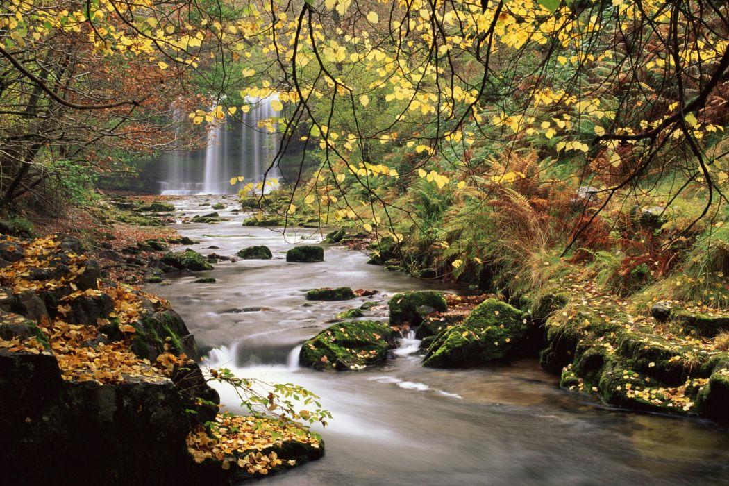 bosque rio cascada naturaleza wallpaper