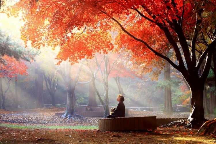 girl trees leaves autumn nature woman wallpaper