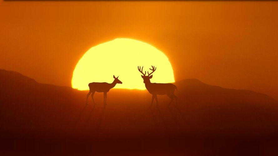 animals sky nature sun deer wallpaper