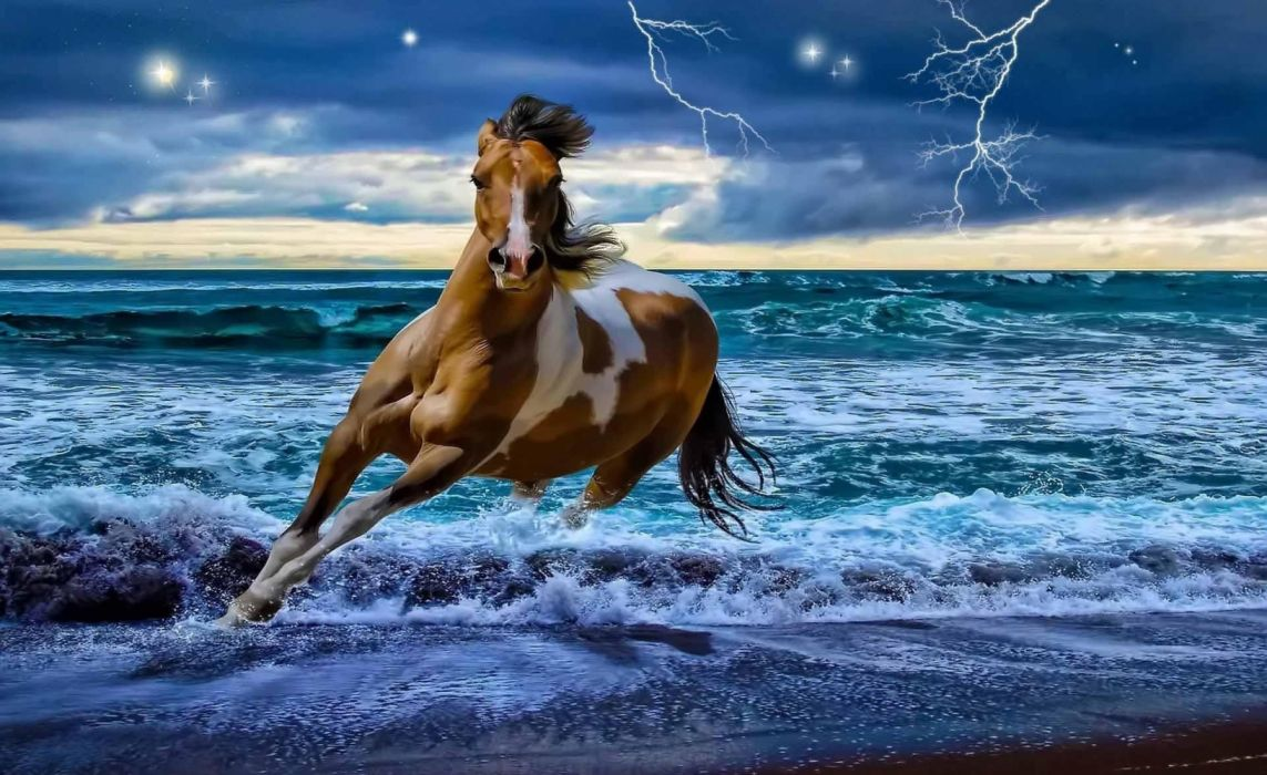 water animals horses lightning sea sky nature retouch widescreen wallpaper