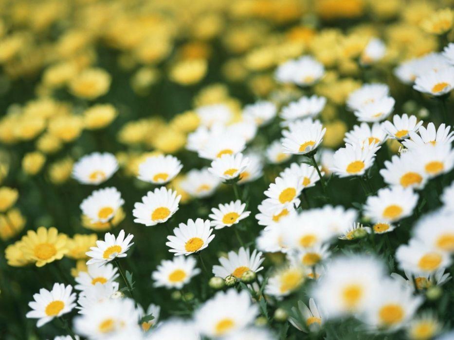 beautiful nature flowers wallpaper