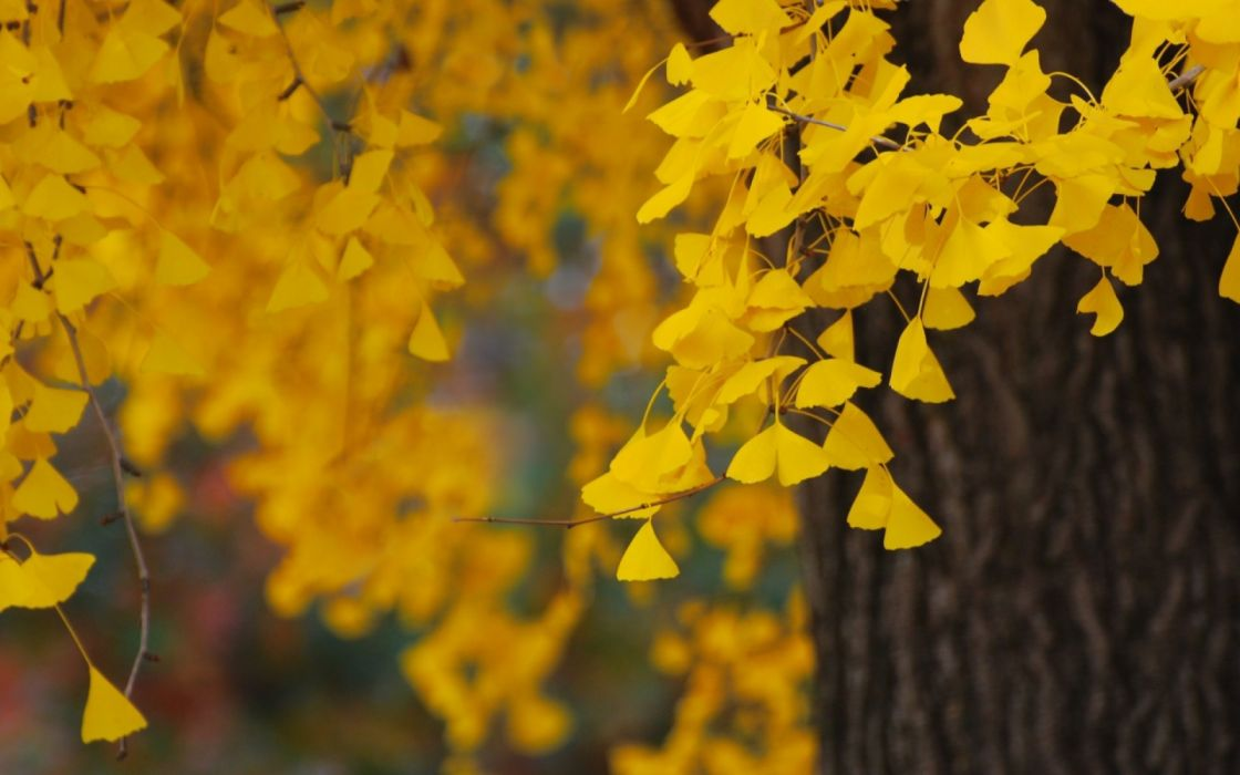 trees autumn nature wallpaper