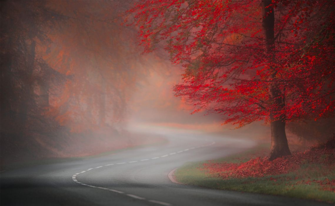 trees road autumn nature fog wallpaper