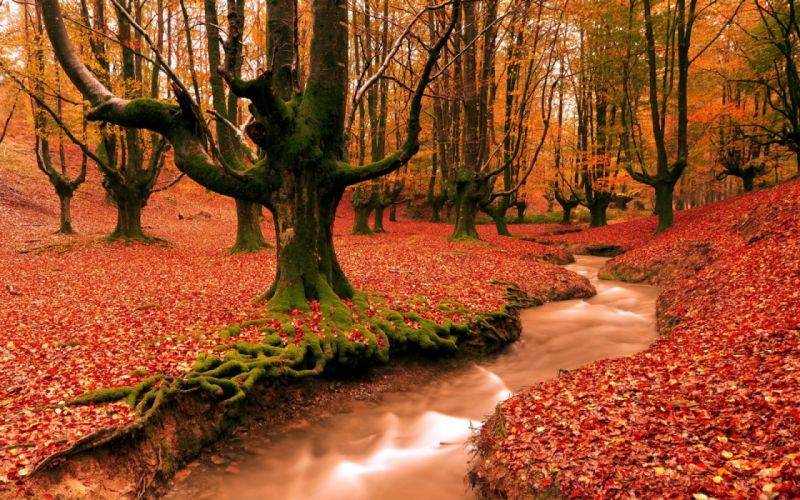 water forest leaves autumn nature wallpaper
