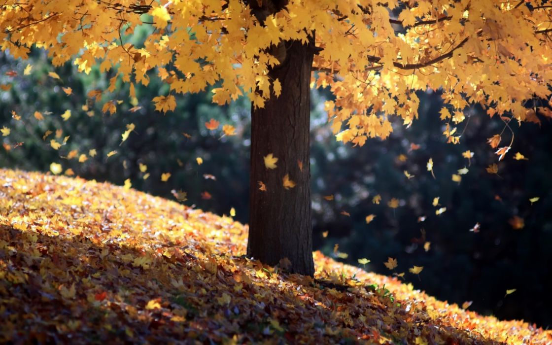 bokeh trees forest leaves autumn nature wallpaper
