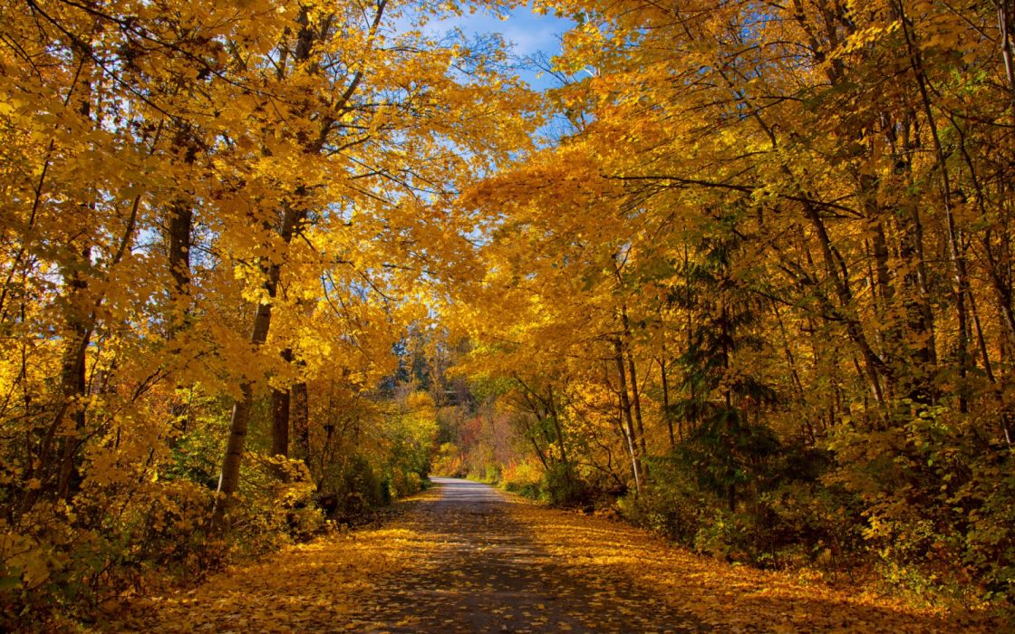 trees road leaves sky autumn nature wallpaper
